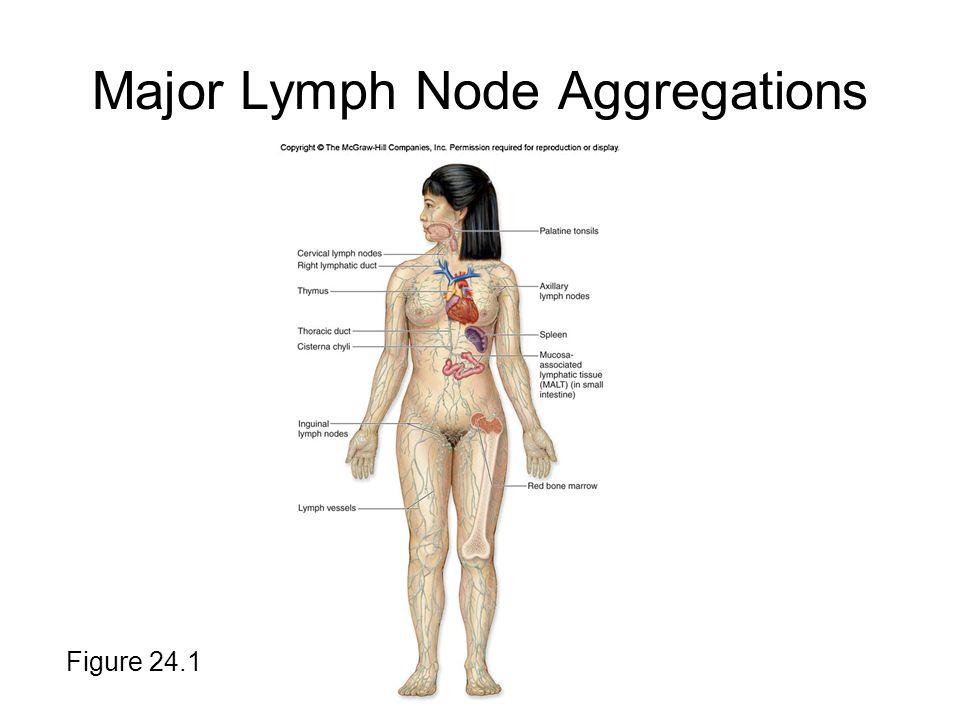 Major Lymph Node Aggregations Figure 24.1