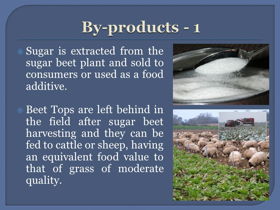  Sugar is extracted from the sugar beet plant and sold to consumers or used as a food additive.