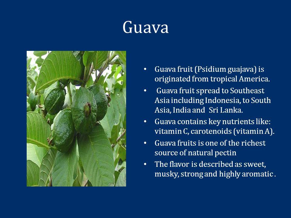 Guava Guava fruit (Psidium guajava) is originated from tropical America.