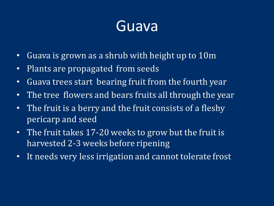 Guava Guava is grown as a shrub with height up to 10m Plants are propagated from seeds Guava trees start bearing fruit from the fourth year The tree flowers and bears fruits all through the year The fruit is a berry and the fruit consists of a fleshy pericarp and seed The fruit takes 17-20 weeks to grow but the fruit is harvested 2-3 weeks before ripening It needs very less irrigation and cannot tolerate frost