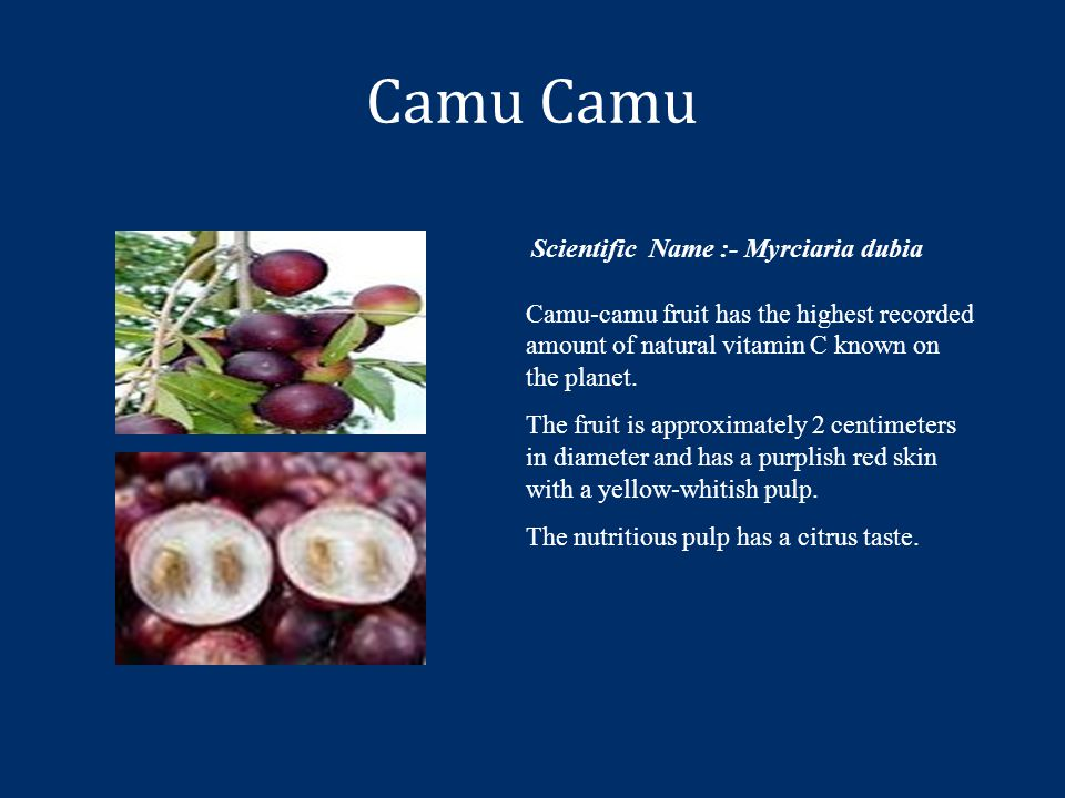 Camu Scientific Name :- Myrciaria dubia Camu-camu fruit has the highest recorded amount of natural vitamin C known on the planet.