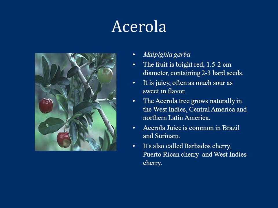 Acerola Malpighia garba The fruit is bright red, 1.5-2 cm diameter, containing 2-3 hard seeds.