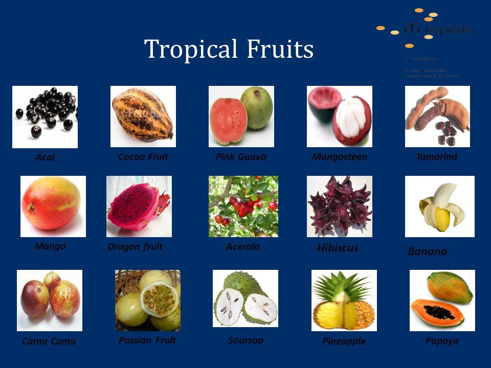 Tropical Fruits Pineapple Papaya Camu Soursop Passion Fruit Acai Pink Guava Tamarind MangosteenCocoa Fruit Mango Dragon fruit Banana Acerola Hibiscus