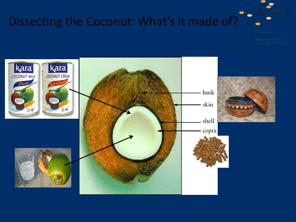 Dissecting the Coconut: What's it made of
