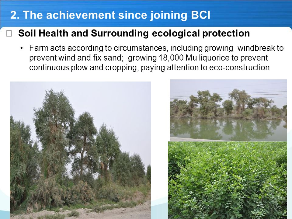 Ⅳ Soil Health and Surrounding ecological protection Farm acts according to circumstances, including growing windbreak to prevent wind and fix sand; growing 18,000 Mu liquorice to prevent continuous plow and cropping, paying attention to eco-construction