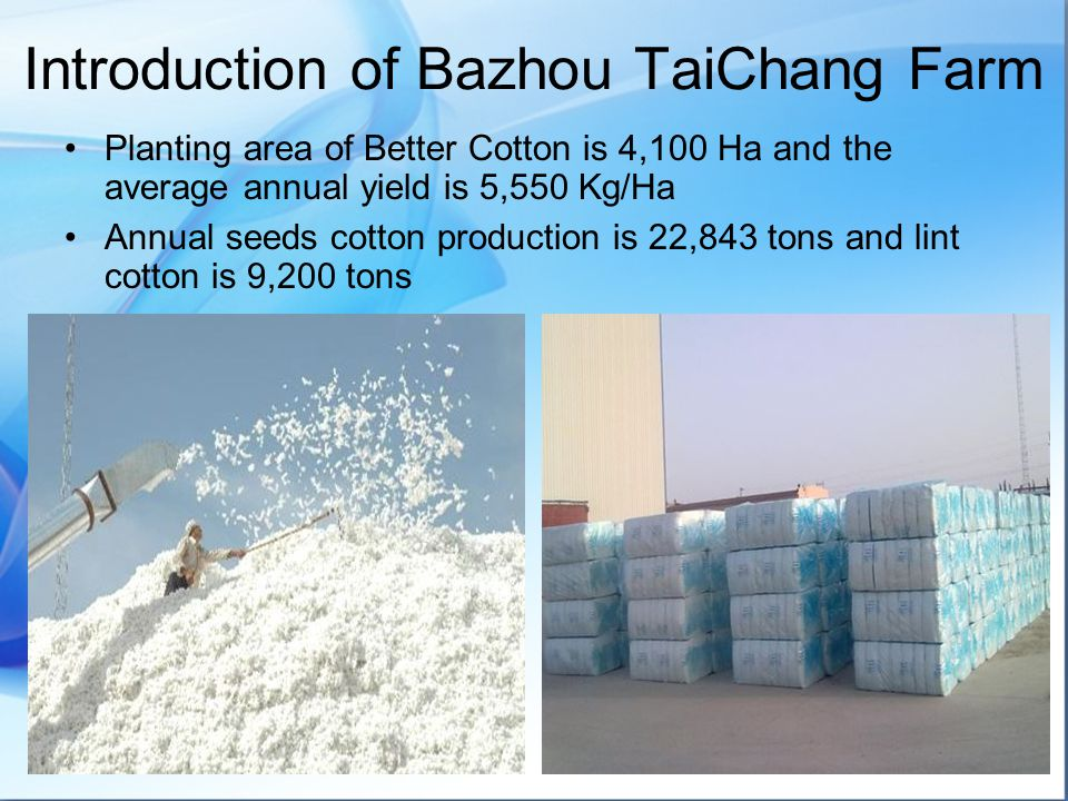 Planting area of Better Cotton is 4,100 Ha and the average annual yield is 5,550 Kg/Ha Annual seeds cotton production is 22,843 tons and lint cotton is 9,200 tons Introduction of Bazhou TaiChang Farm