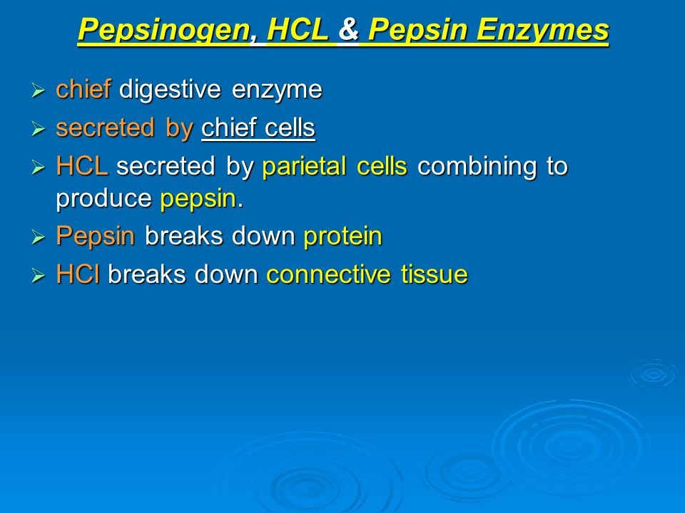 Pepsinogen, HCL & Pepsin Enzymes  chief digestive enzyme  secreted by chief cells  HCL secreted by parietal cells combining to produce pepsin.  Pe