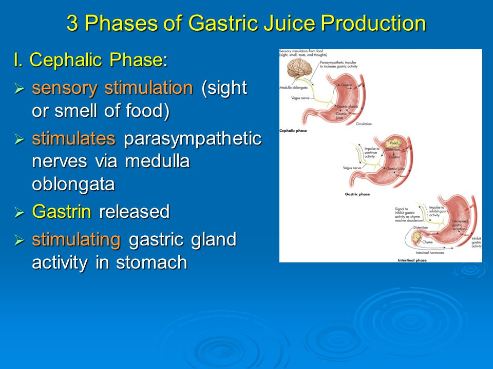 3 Phases of Gastric Juice Production I. Cephalic Phase:  sensory stimulation (sight or smell of food)  stimulates parasympathetic nerves via medulla