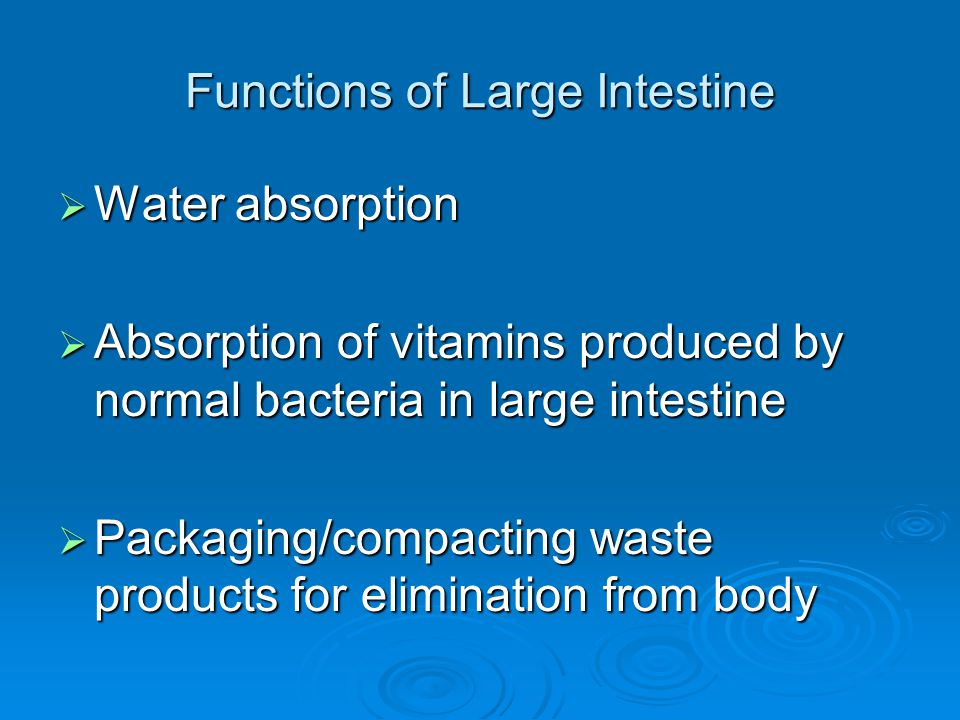 Functions of Large Intestine  Water absorption  Absorption of vitamins produced by normal bacteria in large intestine  Packaging/compacting waste p