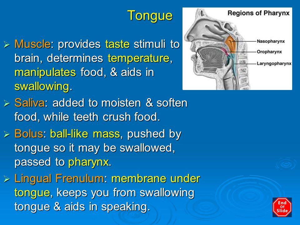 Buccal & Oral Pharynx