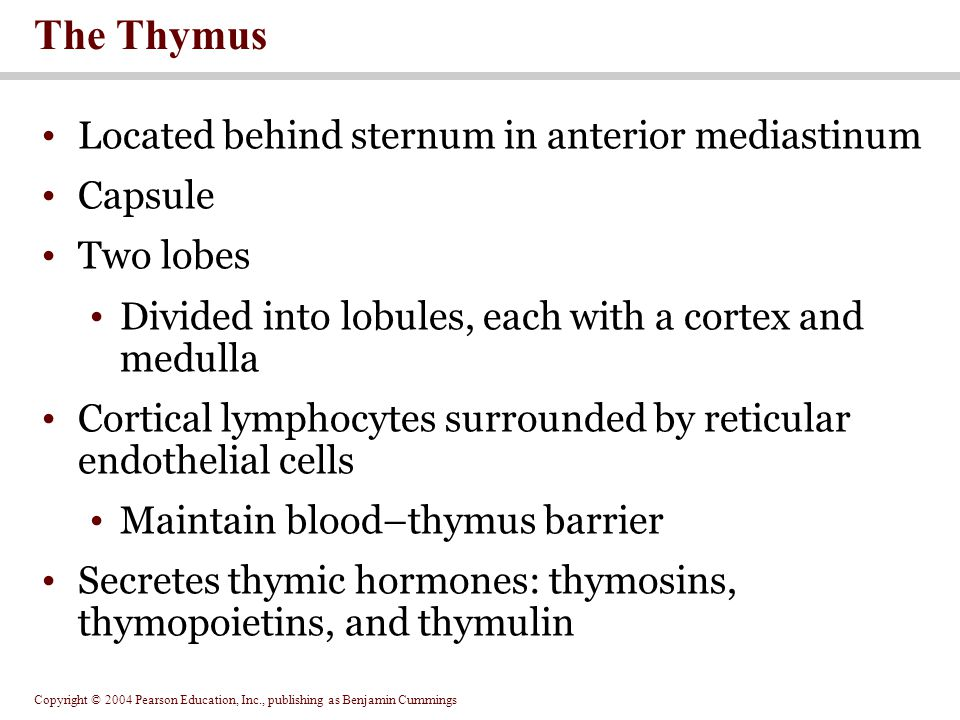Copyright © 2004 Pearson Education, Inc., publishing as Benjamin Cummings Located behind sternum in anterior mediastinum Capsule Two lobes Divided into lobules, each with a cortex and medulla Cortical lymphocytes surrounded by reticular endothelial cells Maintain blood–thymus barrier Secretes thymic hormones: thymosins, thymopoietins, and thymulin The Thymus