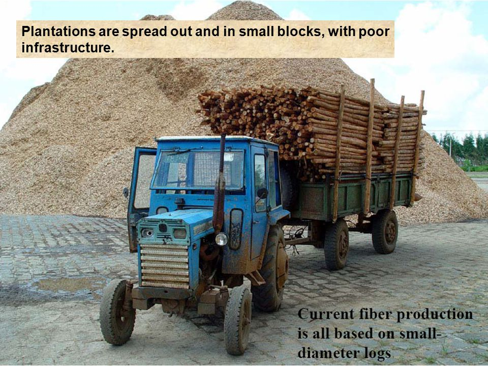Plantations are spread out and in small blocks, with poor infrastructure.