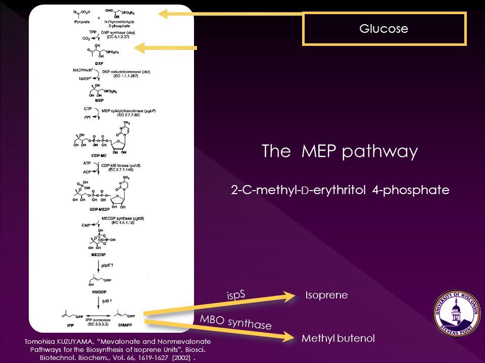 "Tomohisa KUZUYAMA, ""Mevalonate and Nonmevalonate Pathways for the Biosynthesis of Isoprene Units"", Biosci. Biotechnol. Biochem., Vol. 66, 1619-1627 (2"