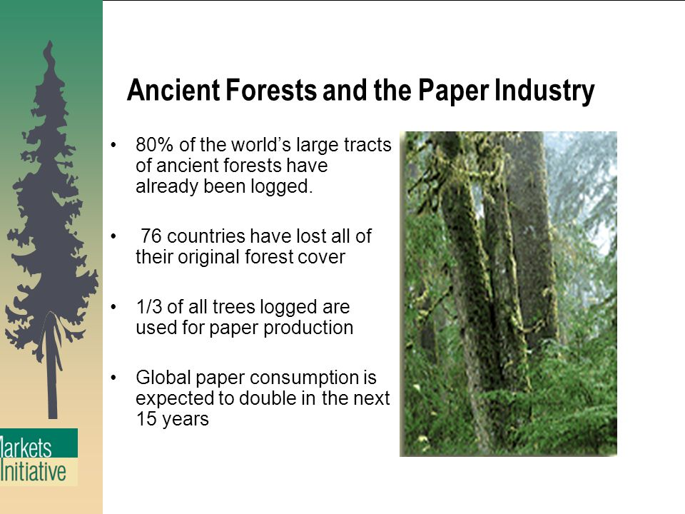 Ancient Forests and the Paper Industry 80% of the world's large tracts of ancient forests have already been logged.