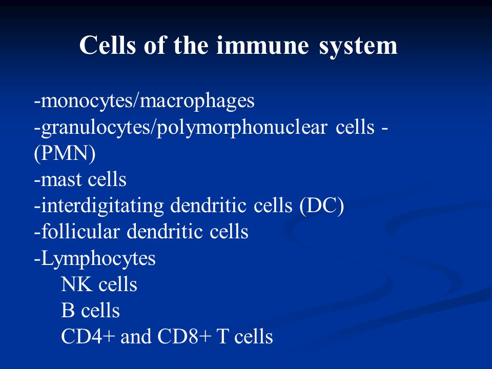 Cells of the immune system -monocytes/macrophages -granulocytes/polymorphonuclear cells - (PMN) -mast cells -interdigitating dendritic cells (DC) -follicular dendritic cells -Lymphocytes NK cells B cells CD4+ and CD8+ T cells