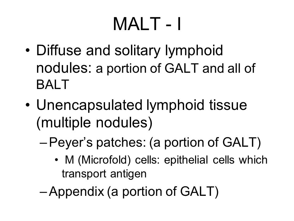 MALT - I Diffuse and solitary lymphoid nodules: a portion of GALT and all of BALT Unencapsulated lymphoid tissue (multiple nodules) –Peyer's patches: (a portion of GALT) M (Microfold) cells: epithelial cells which transport antigen –Appendix (a portion of GALT)