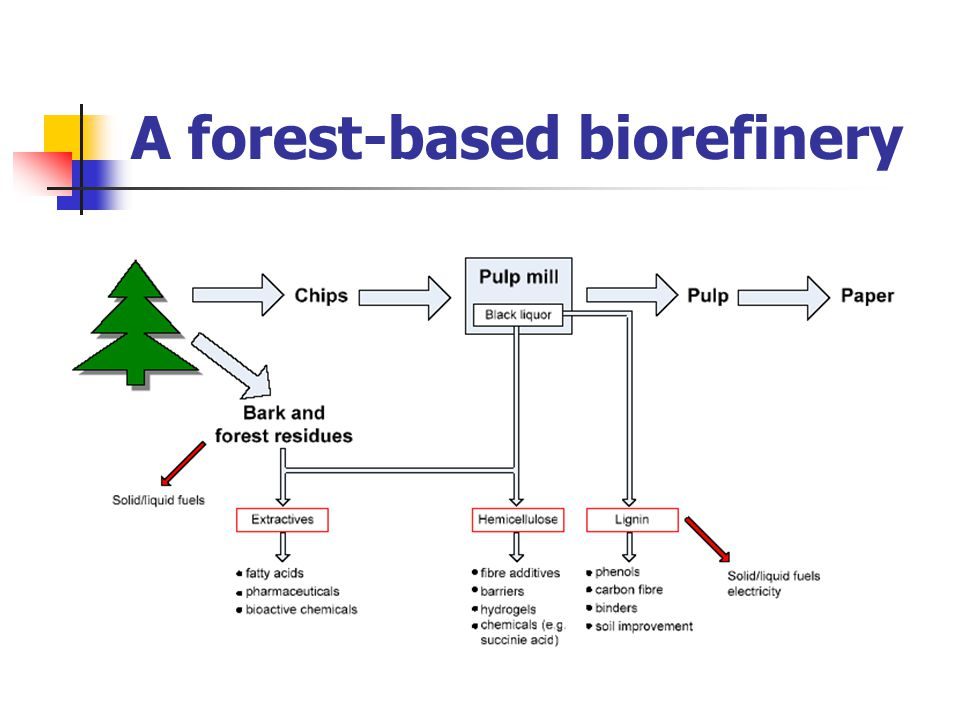 A forest-based biorefinery
