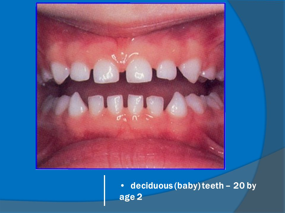 deciduous (baby) teeth – 20 by age 2
