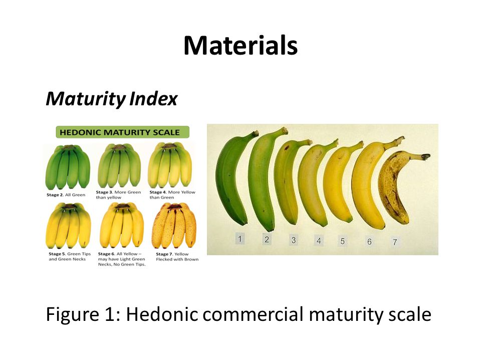 Maturity Index Scale Three samples were randomly taken from the sample pool and compared to the hedonic commercial maturity scale (Figure 1).