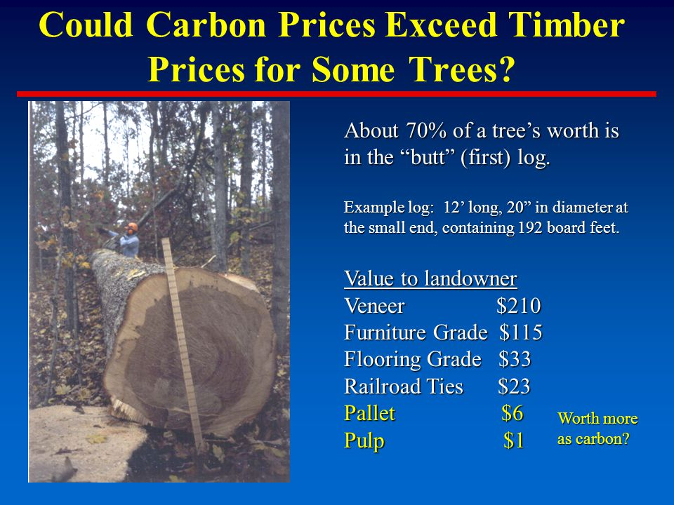 Could Carbon Prices Exceed Timber Prices for Some Trees.