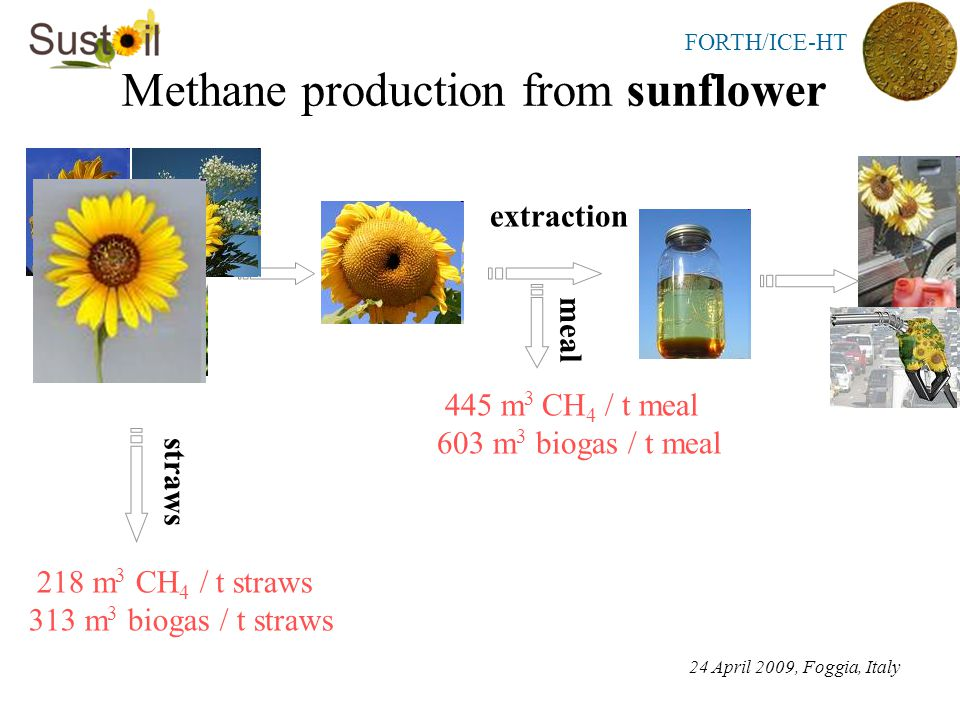 FORTH/ICE-HT Methane production from sunflower 24 April 2009, Foggia, Italy straws 218 m 3 CH 4 / t straws 313 m 3 biogas / t straws extraction meal 445 m 3 CH 4 / t meal 603 m 3 biogas / t meal