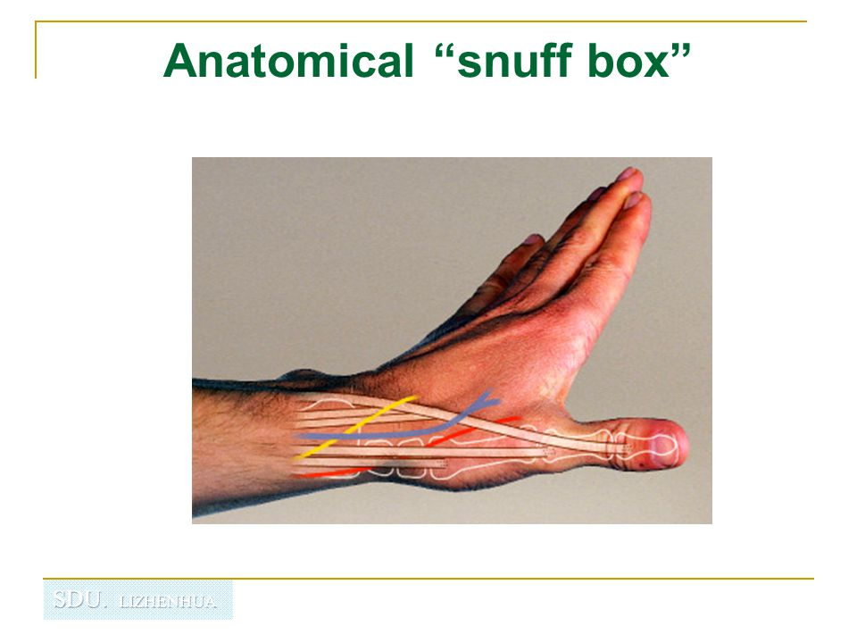 "Anatomical ""snuff box"""