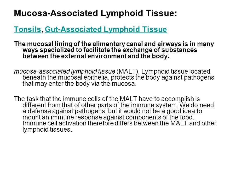 Mucosa-Associated Lymphoid Tissue: Tonsils, Gut-Associated Lymphoid Tissue TonsilsGut-Associated Lymphoid Tissue The mucosal lining of the alimentary