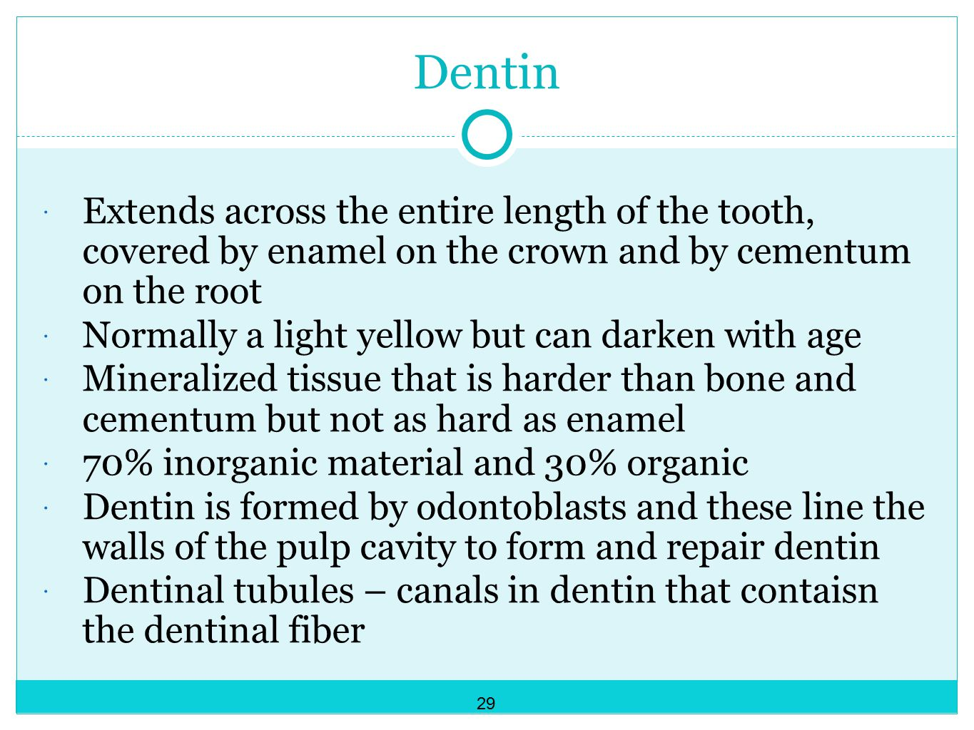 Dentin  Extends across the entire length of the tooth, covered by enamel on the crown and by cementum on the root  Normally a light yellow but can darken with age  Mineralized tissue that is harder than bone and cementum but not as hard as enamel  70% inorganic material and 30% organic  Dentin is formed by odontoblasts and these line the walls of the pulp cavity to form and repair dentin  Dentinal tubules – canals in dentin that contaisn the dentinal fiber 29
