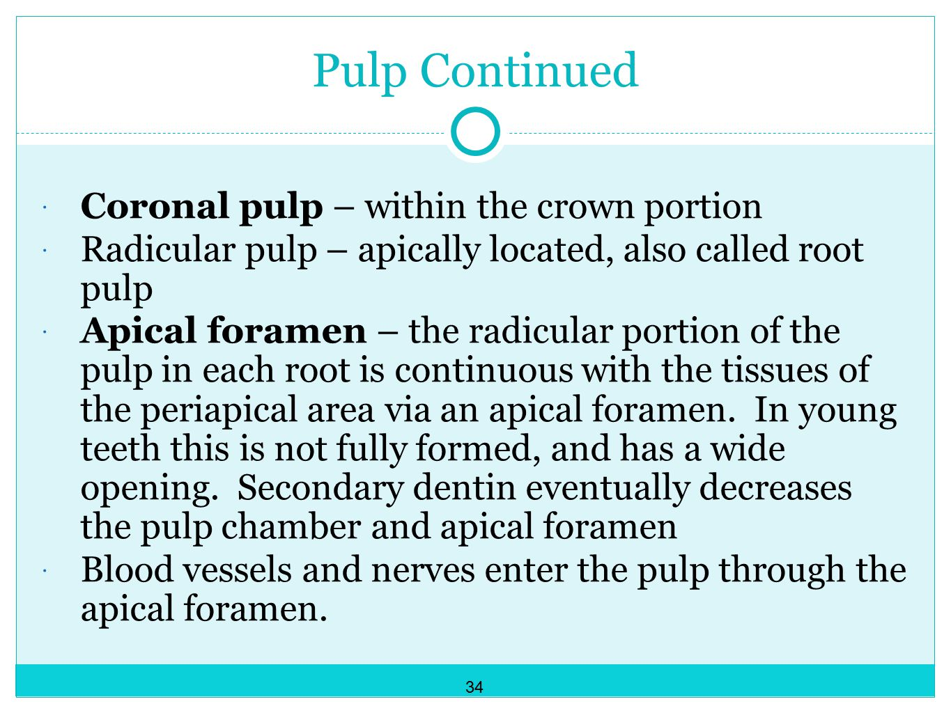 Pulp Continued  Coronal pulp – within the crown portion  Radicular pulp – apically located, also called root pulp  Apical foramen – the radicular portion of the pulp in each root is continuous with the tissues of the periapical area via an apical foramen.