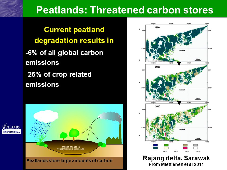 Peatlands: Threatened carbon stores Peatlands store large amounts of carbon Peatland degradation leads to CO 2 emissions which contribute to global warming Current peatland degradation results in -6% of all global carbon emissions -25% of crop related emissions Rajang delta, Sarawak From Miettienen et al 2011