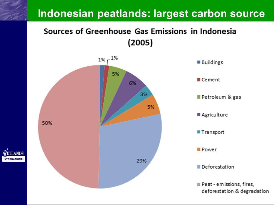 Indonesian peatlands: largest carbon source