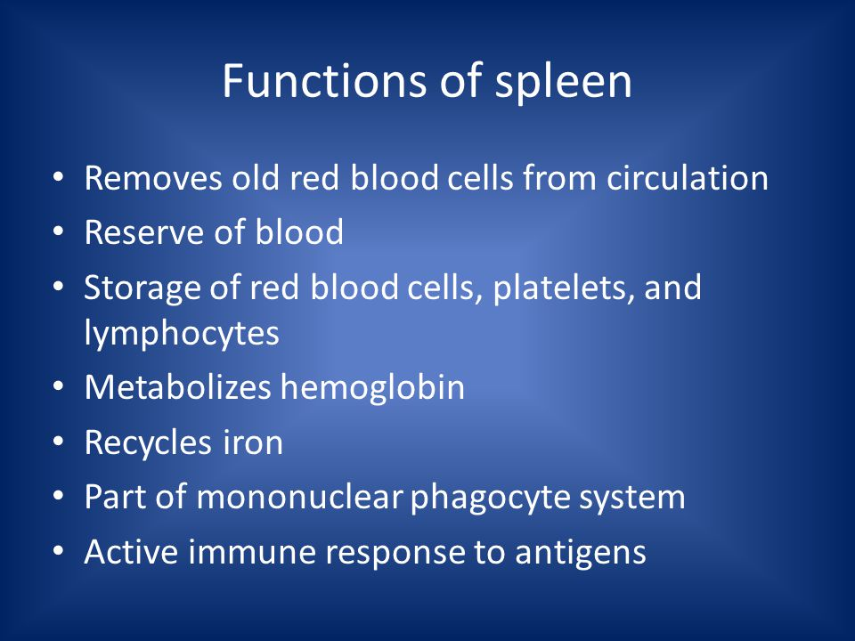 Functions of spleen Removes old red blood cells from circulation Reserve of blood Storage of red blood cells, platelets, and lymphocytes Metabolizes hemoglobin Recycles iron Part of mononuclear phagocyte system Active immune response to antigens