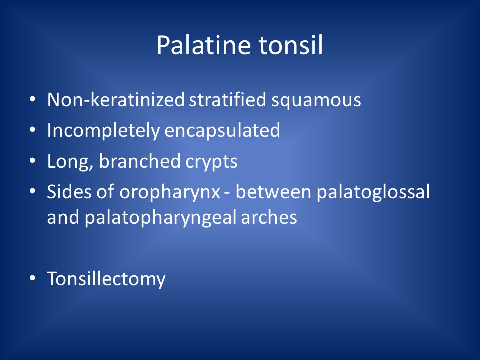 Palatine tonsil Non-keratinized stratified squamous Incompletely encapsulated Long, branched crypts Sides of oropharynx - between palatoglossal and palatopharyngeal arches Tonsillectomy