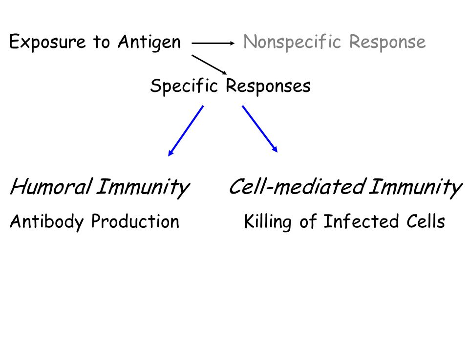 Exposure to AntigenNonspecific Response Specific Responses Humoral Immunity Cell-mediated Immunity Antibody ProductionKilling of Infected Cells