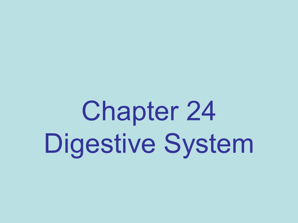 Chapter 24 Digestive System