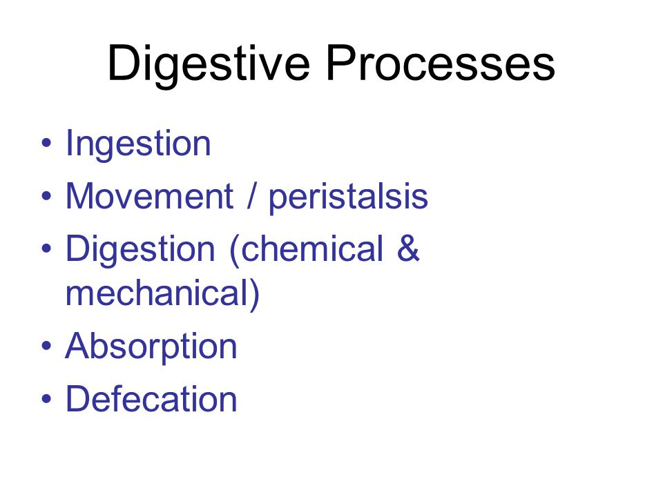 Digestive Processes Ingestion Movement / peristalsis Digestion (chemical & mechanical) Absorption Defecation