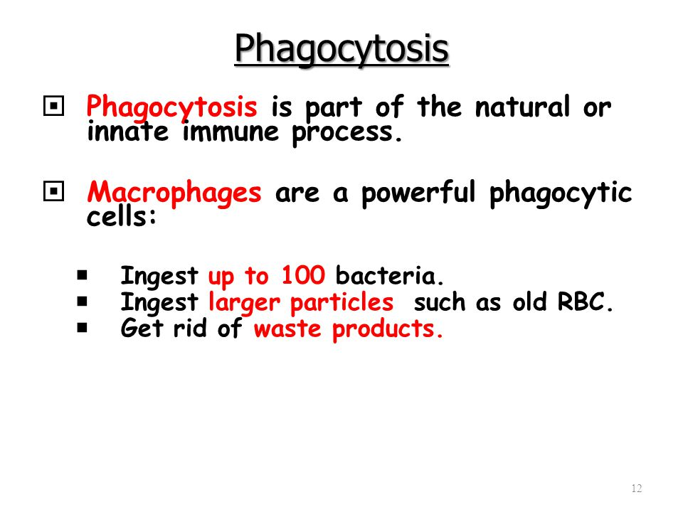 Phagocytosis  Phagocytosis is part of the natural or innate immune process.  Macrophages are a powerful phagocytic cells:  Ingest up to 100 bacteri