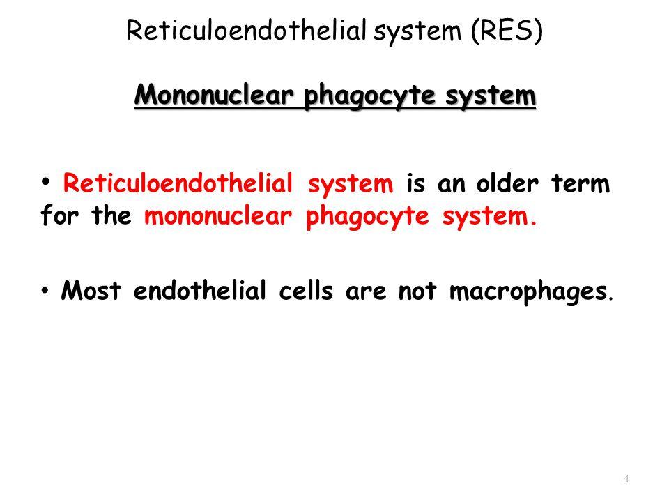 Mononuclear phagocyte system Reticuloendothelial system (RES) Mononuclear phagocyte system Reticuloendothelial system is an older term for the mononuc