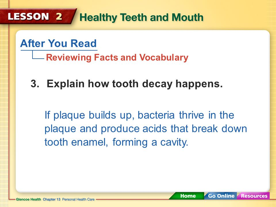 After You Read Reviewing Facts and Vocabulary 2.What is the pulp of the tooth.