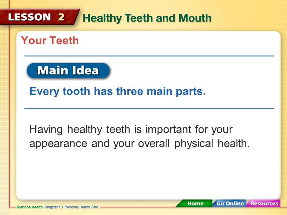 periodontium pulp plaque halitosis periodontal disease malocclusion