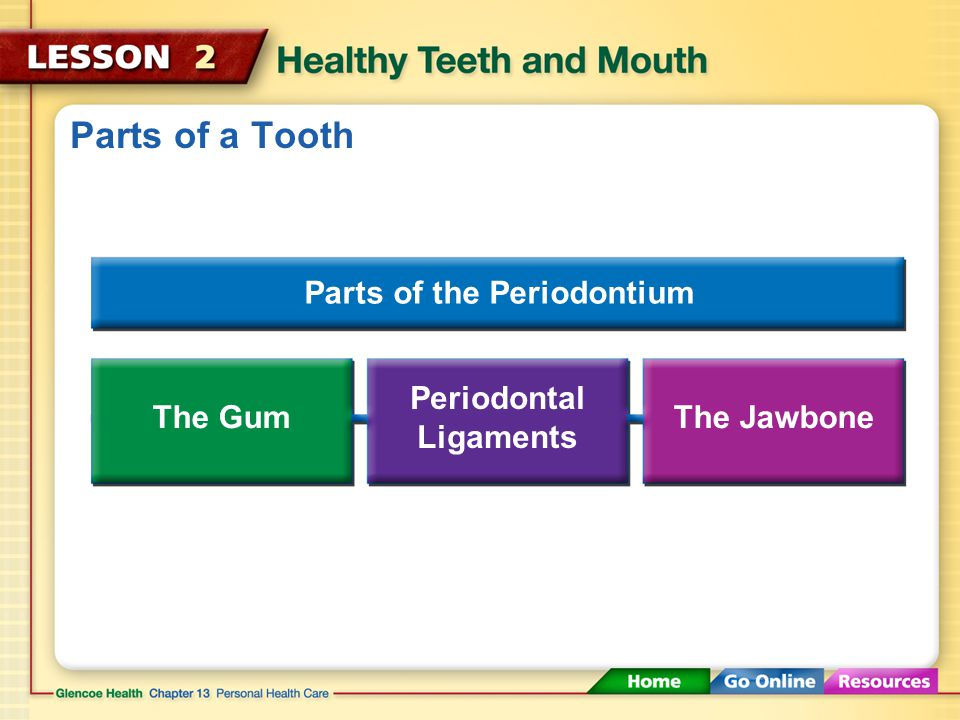 Keeping Your Teeth and Mouth Healthy Visit a dentist regularly.