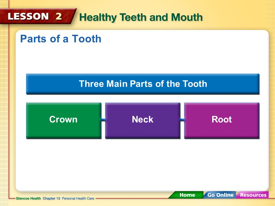 Parts of a Tooth Three Main Parts of the Tooth CrownNeckRoot