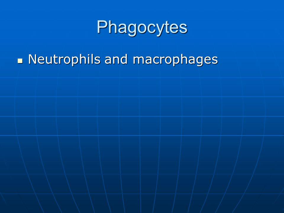 Phagocytes Neutrophils and macrophages Neutrophils and macrophages