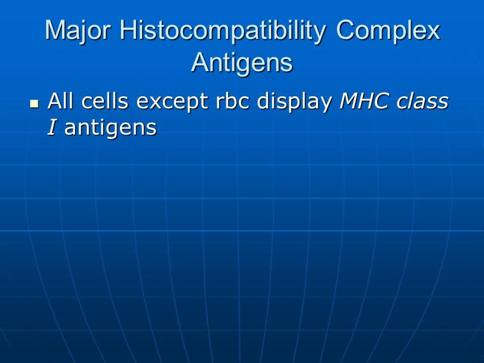 Major Histocompatibility Complex Antigens All cells except rbc display MHC class I antigens All cells except rbc display MHC class I antigens