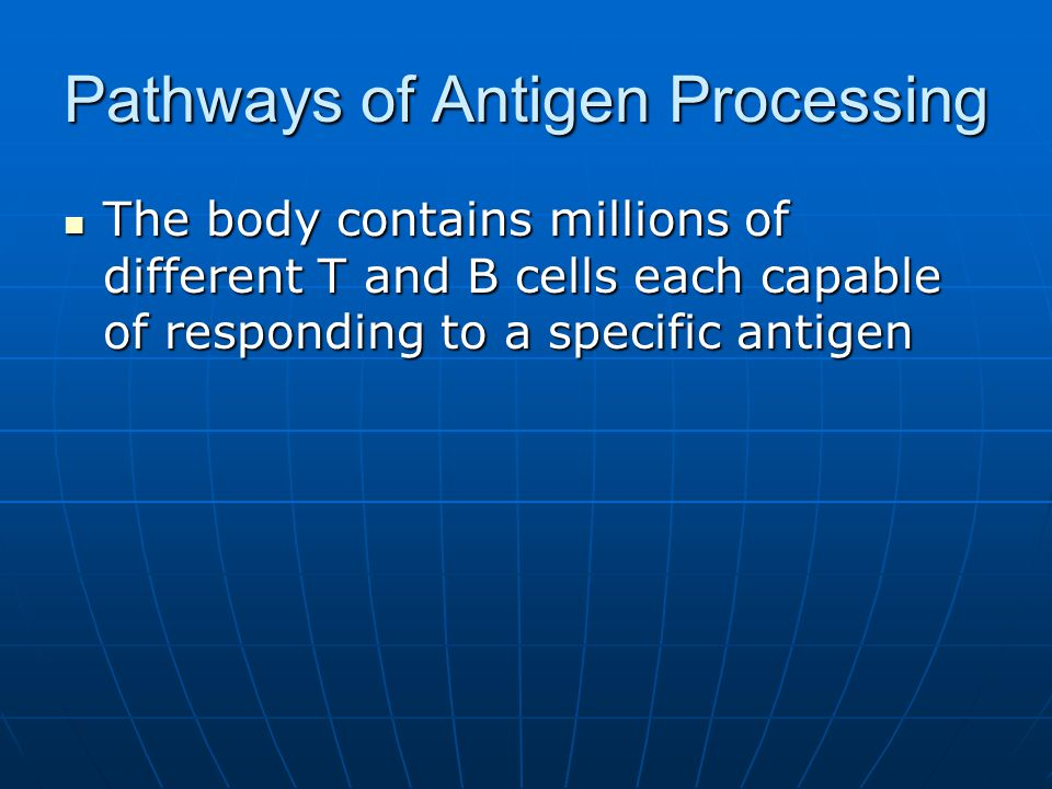 Pathways of Antigen Processing The body contains millions of different T and B cells each capable of responding to a specific antigen The body contain