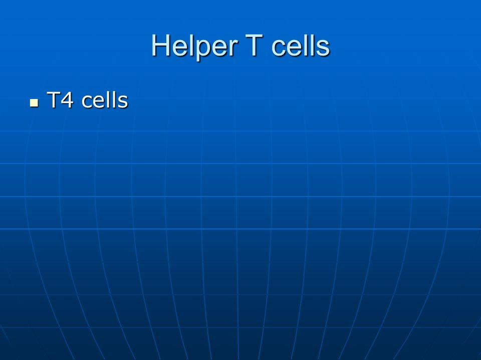 Helper T cells T4 cells T4 cells