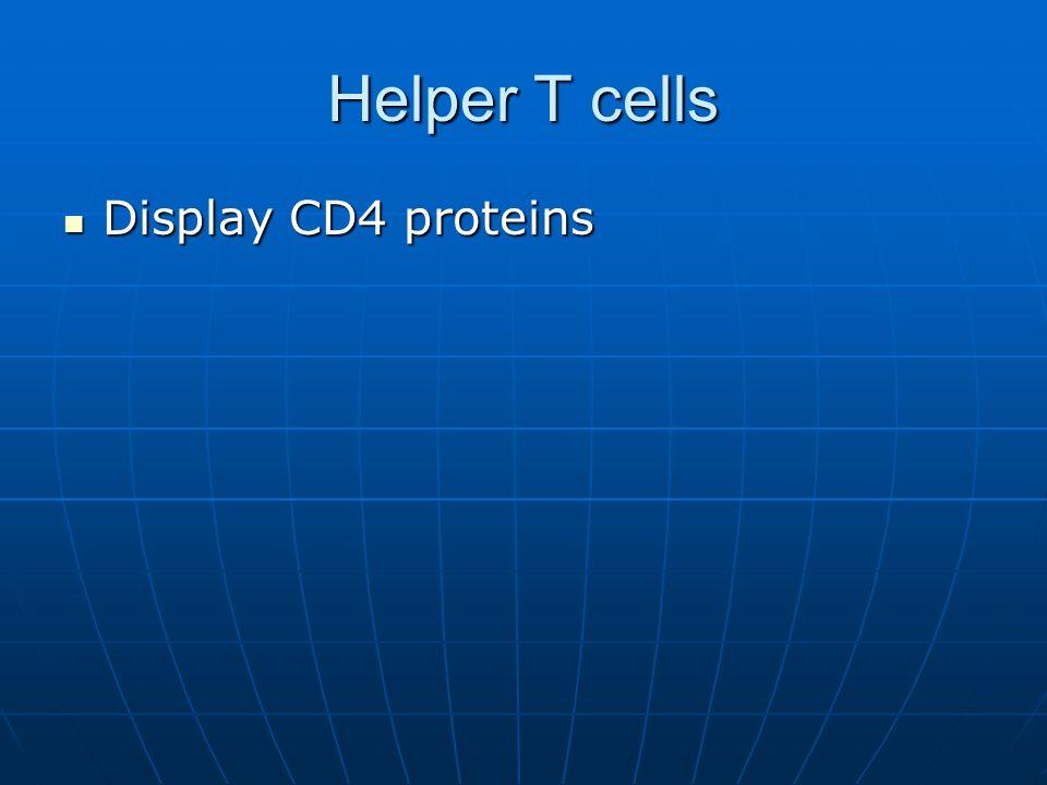 Helper T cells Display CD4 proteins Display CD4 proteins
