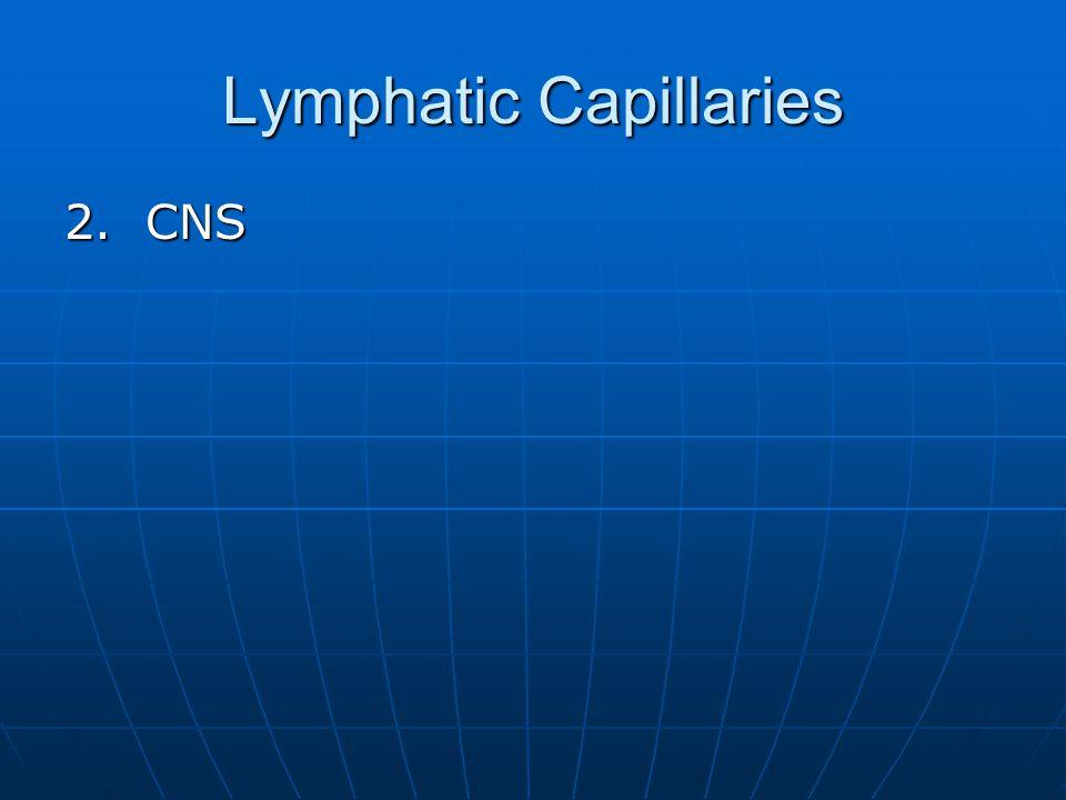 Lymphatic Capillaries 2. CNS