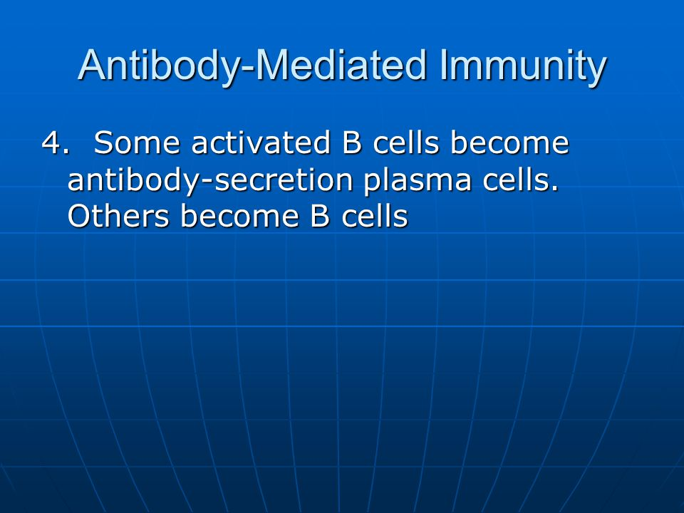 Antibody-Mediated Immunity 4. Some activated B cells become antibody-secretion plasma cells. Others become B cells