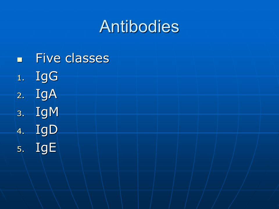 Antibodies Five classes Five classes 1. IgG 2. IgA 3. IgM 4. IgD 5. IgE